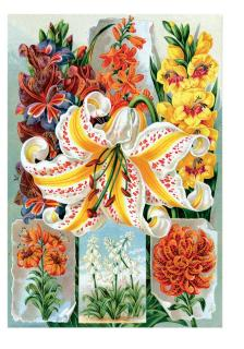Lilies (Flowers Greeting Cards)