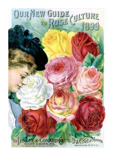 Lady with Roses (Flowers Greeting Cards)