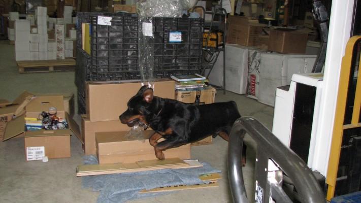 Dogs in the warehouse