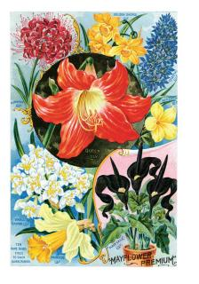 Flowers from Bulbs (Flowers Greeting Cards)
