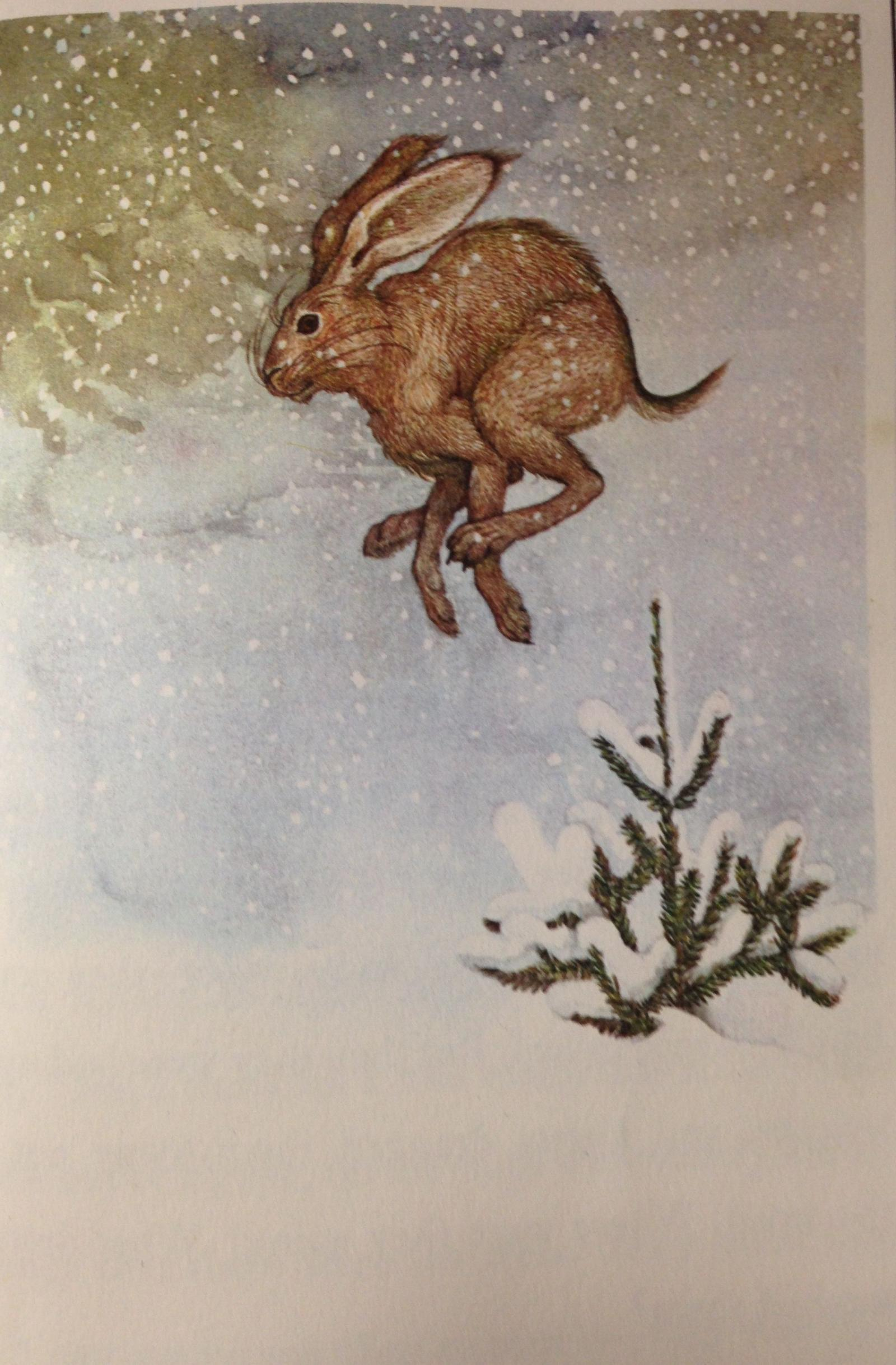 Illustration by Nancy Ekholm Burkert for 'The Fir Tree'