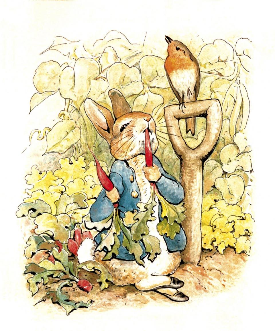 Illustration from 'The Tale of Peter Rabbit' by Beatrix Potter
