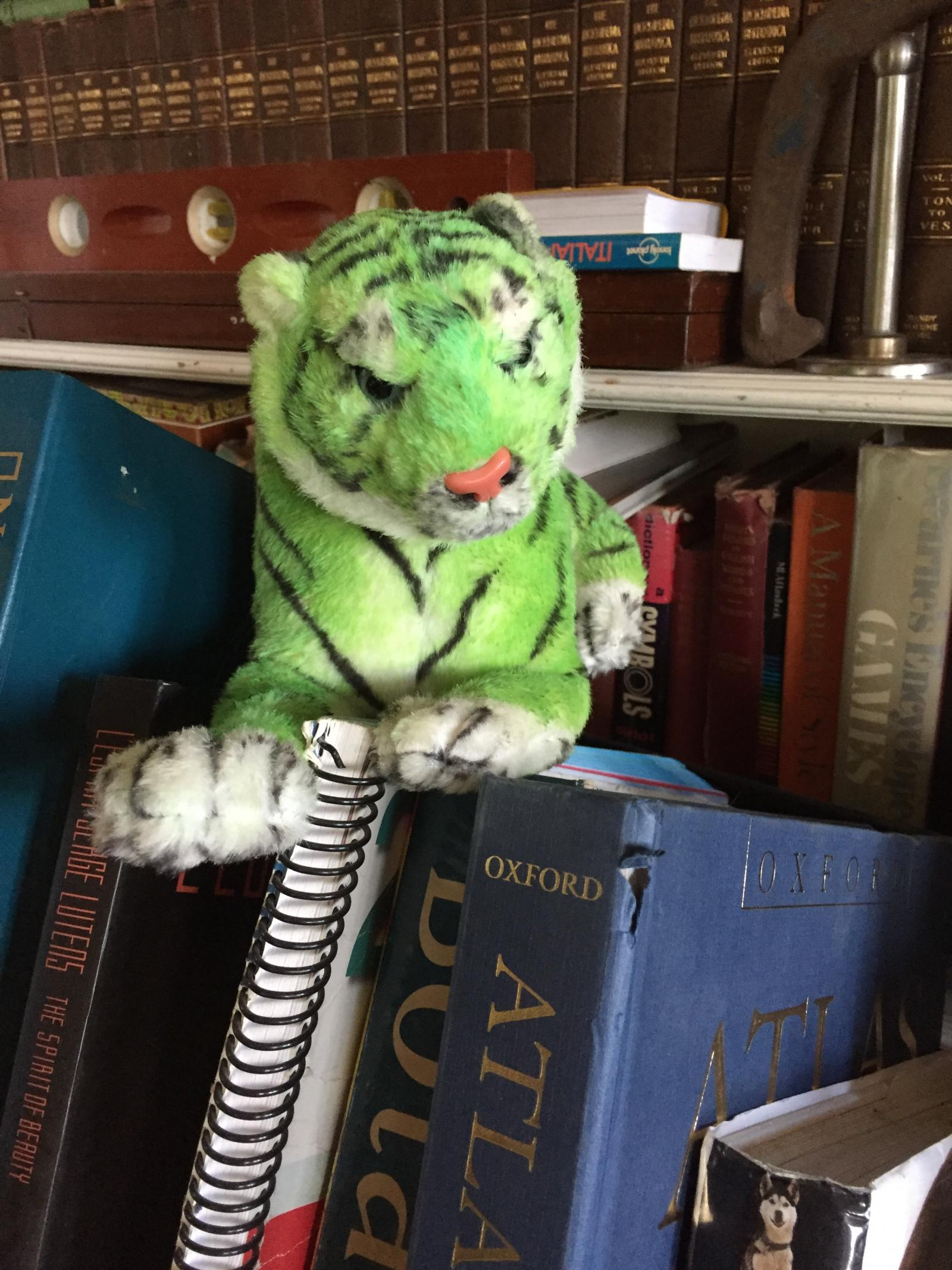 Green Tiger Thinking about Geography