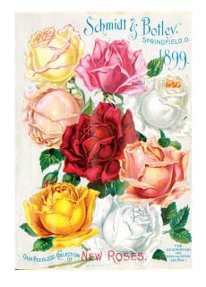 Eight Roses (Flowers Greeting Cards)