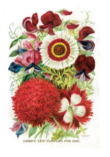 A Red & White Bouquet (Flowers Greeting Cards)