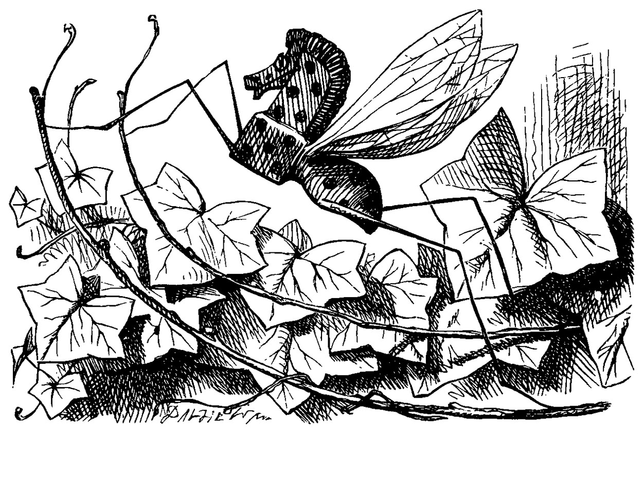 Illustration by John Tenniel for 'Alice through the Looking Glass'